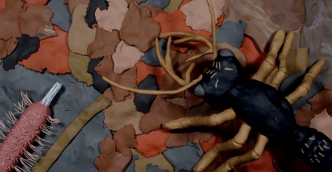 Claymation - Documentales de insectos hechos con plastilina