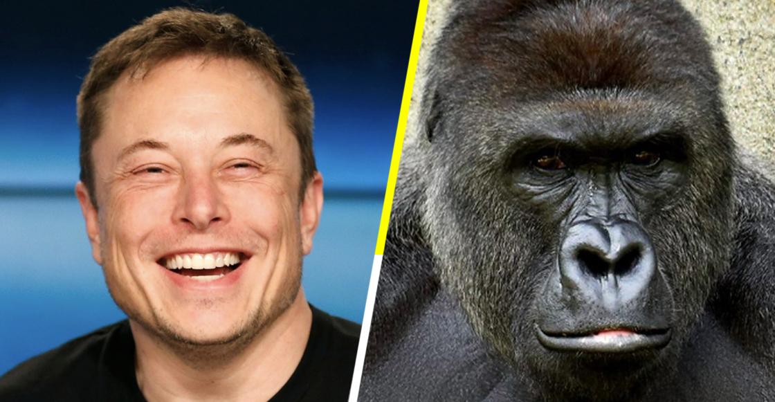Coches eléctricos, viajes espaciales y ahora Elon Musk lanza el rap de Harambe
