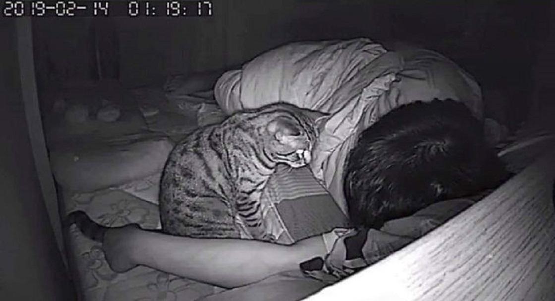 Gato grabado mientras su dueño duerme