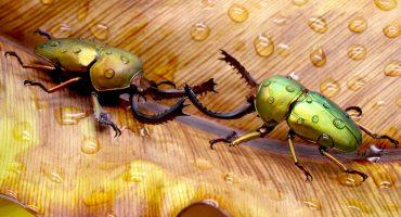Yoda, Darwin, Astérix y Obélix: Los nombres de los nuevos escarabajos descubiertos en la India