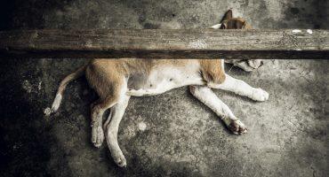 Denuncian que asesino de perrito en Piedras Negras, Coahuila, está protegido por el alcalde