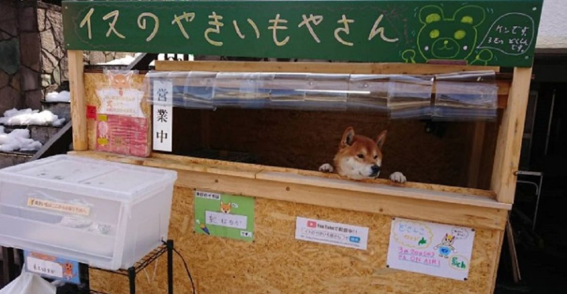 El perrito que atiende un puesto de papas en Japón
