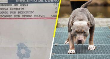 Lero lero: Mujer utiliza a su pitbull para evitar lectura de agua y la multan con $500 😂