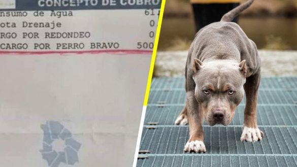 Lero lero: Mujer utiliza a su pitbull para evitar lectura de agua y la multan con $500