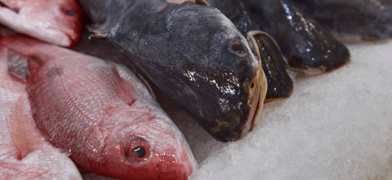 GatoxLiebre: Estudio expone el fraude en México en la comida del mar