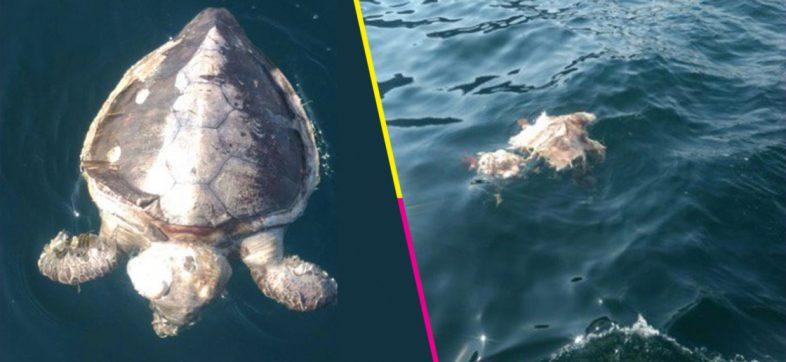 Profepa investiga las causas de muerte de al menos 101 tortugas en la costa de Guerrero