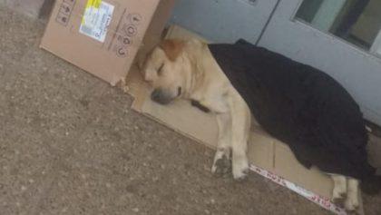 Él es Toto, el perrito labrador que espera afuera del hospital a su dueño fallecido