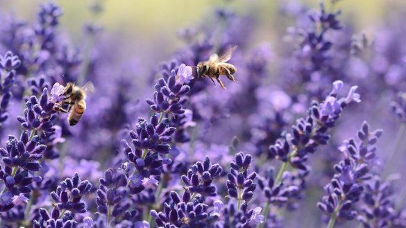 'Apocalíptica' la situación para las abejas mexicanas, alerta investigador de la UNAM