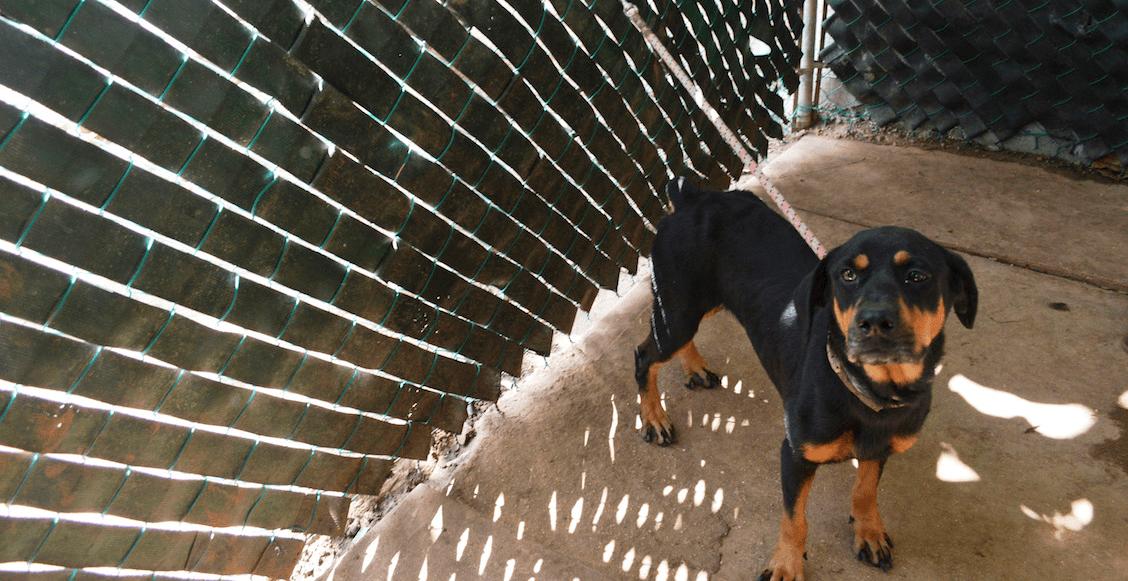 En defensa de los animales, Jalisco castigará con prisión su maltrato y la tortura