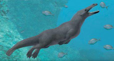 Hallan en Perú el fósil de una ballena de 4 patas que vivía en mar y tierra