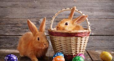 Esta es la historia del conejo y huevos de Pascua 🐇