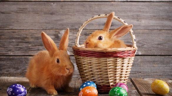 la historia del conejo y huevos de Pascua