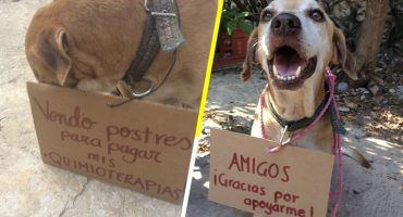 Él es Deko, el perrito que vende postres para poder pagar su quimioterapia 😭
