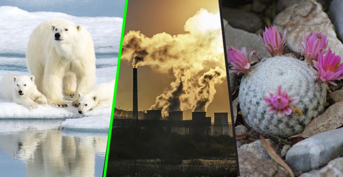 Día de la Tierra: ¿Por qué se extinguen algunos animales y plantas en México y el mundo?