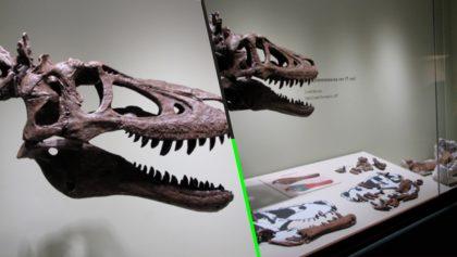 What? Alguien está vendiendo el fósil de un dinosaurio bebé en eBay