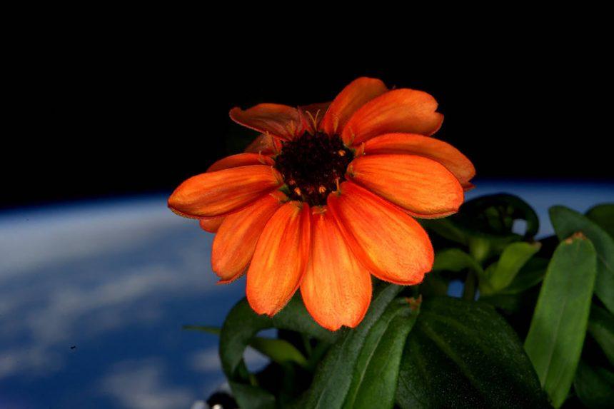 Las increíbles fotos de la Tierra, que el astronauta Scott Kelly tomó desde el espacio