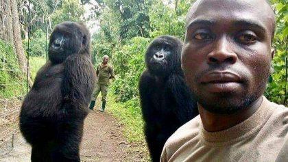 ¿La foto del año? Dos gorilas posan en una selfie con sus rescatistas