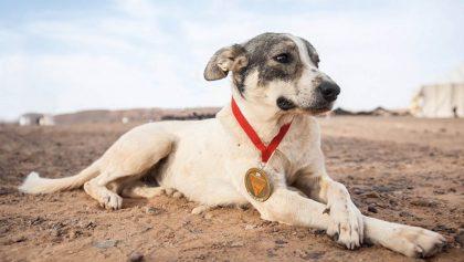 Conoce a Cactus, el perro maratonista que es una sensación mundial
