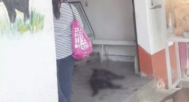 Maldito: Carnicero acuchilla y mata a perrito por pararse afuera de su negocio 😡