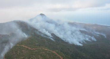 Actualmente hay 95 incendios forestales activos en 18 estados: Conafor