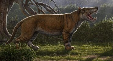 Identifican el fósil de un nuevo mamífero gigante: El gran león africano