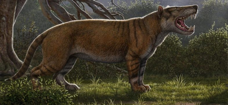 León gigante africano