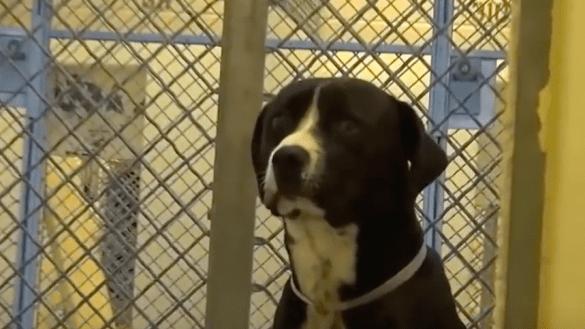 El momento en el que este perrito se entera que finalmente será adoptado