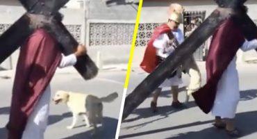 Ternura nivel: Perrito callejero intenta defender a 'Jesús' durante un viacrucis de Semana Santa 😍