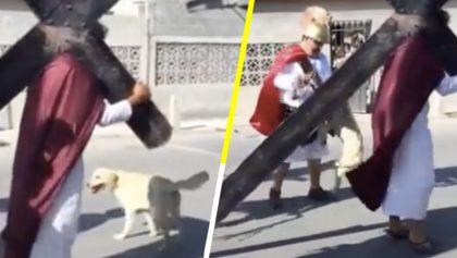 Ternura nivel: Perrito callejero intenta defender a 'Jesús' durante un viacrucis de Semana Santa