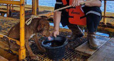 WTF? Encontraron a un perro nadando a más de 200 kilómetros de la costa