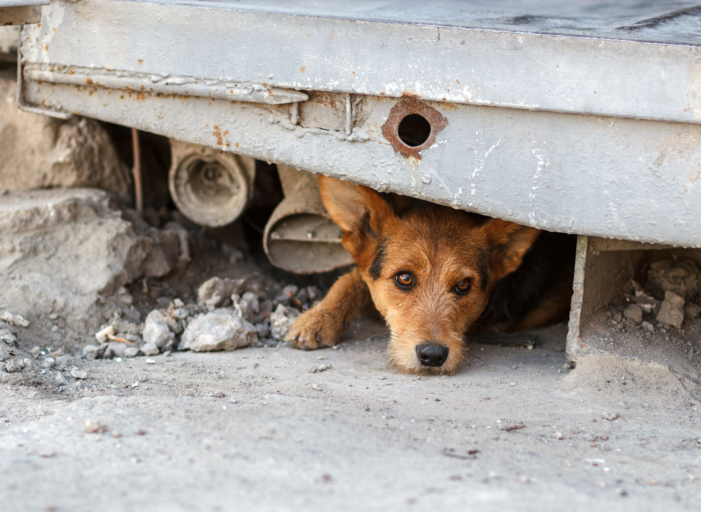¡¿Por qué?! Una Diputada de Morena propuso matar a perros y gatos callejeros en Puebla
