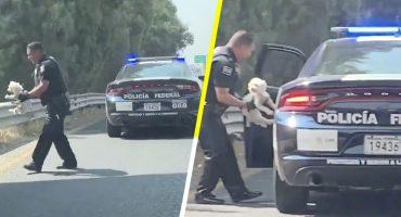 ¡Heroé! Así fue como un policía federal rescató a un cachorrito abandonado en plena carretera 😭