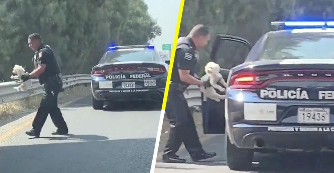 ¡Heroé! Así fue como un policía federal rescató a un cachorrito abandonado en plena carretera