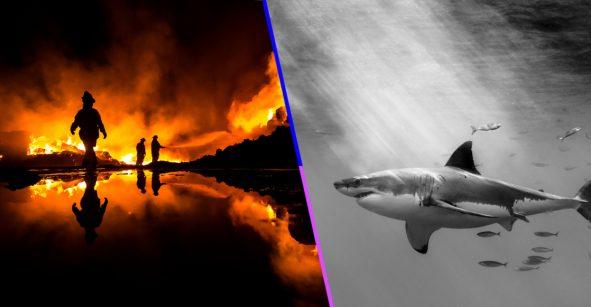 La fotografías tomadas por un mexicanos que conquistaron los Sony World Photo Awards 2019