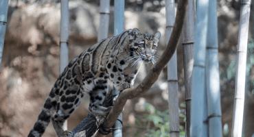 Es ahora o nunca: ONU alerta sobre la extinción de un millón de especies