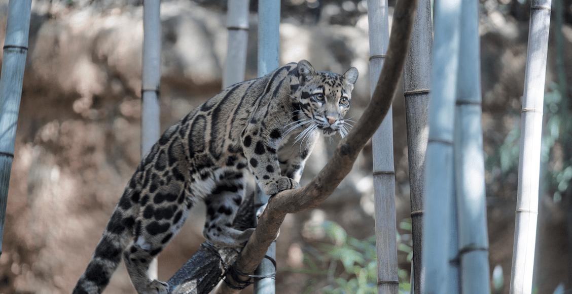 Alerta-ONU-especies-peligro-extinción