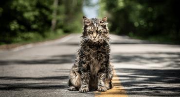 El mundo felino está de luto: Murió el gato de 'Pet Sematary'