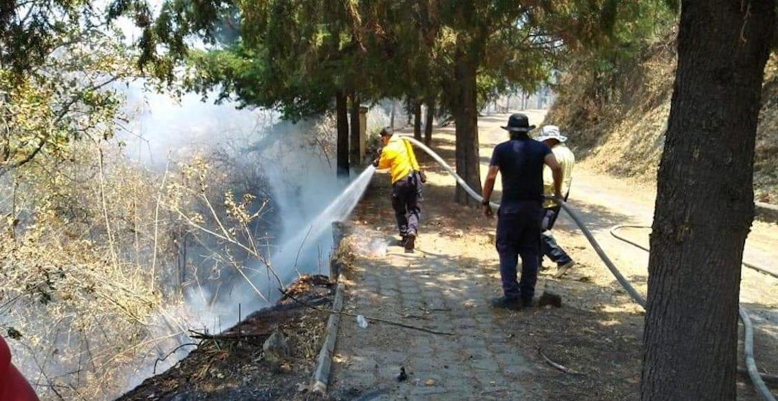 Reportera que documentó incendios forestales en Michoacán es víctima de amenazas