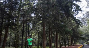 Gobierno CDMX planea sembrar 10 millones de árboles y plantas ante los problemas ambientales