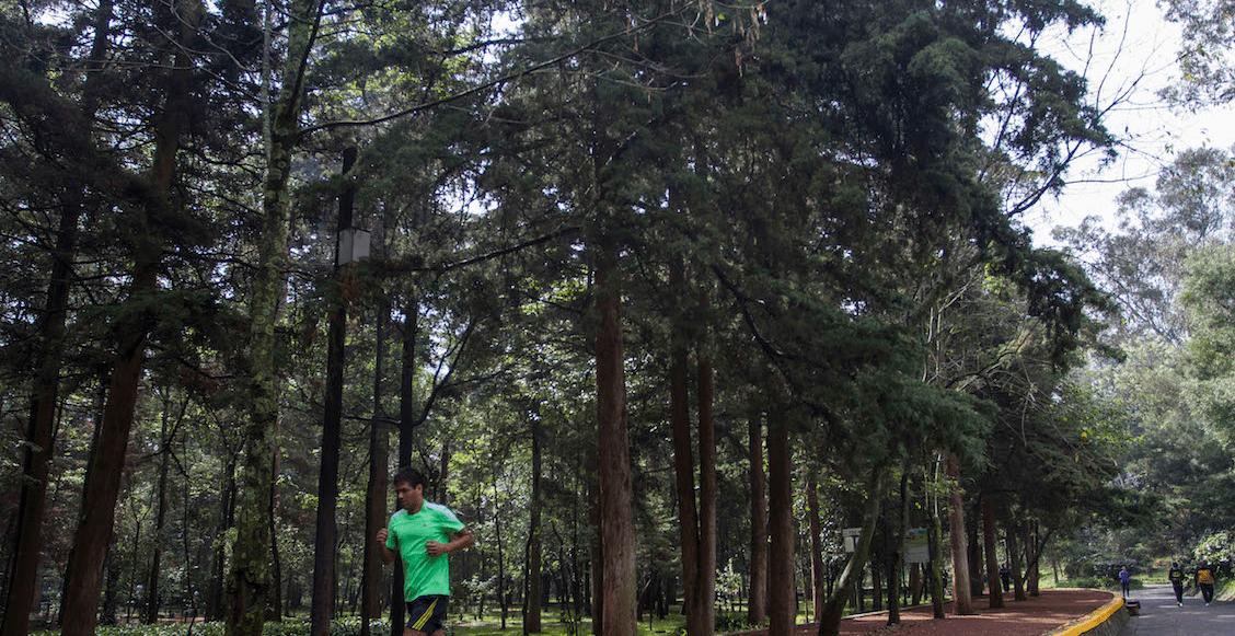 Ante los problemas ambientales, gobierno CDMX planea sembrar 10 millones de árboles y plantas