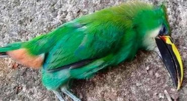 Estamos cada vez peor: Por ola de calor, aves mueren en San Luis Potosí