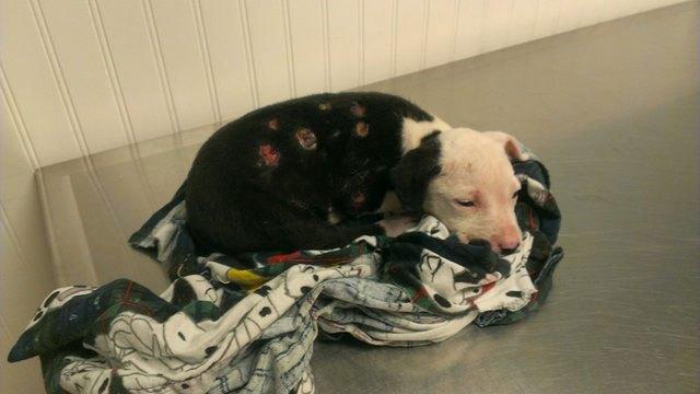 La historia del perrito que fue salvado de un incendio y se convirtió en bombero