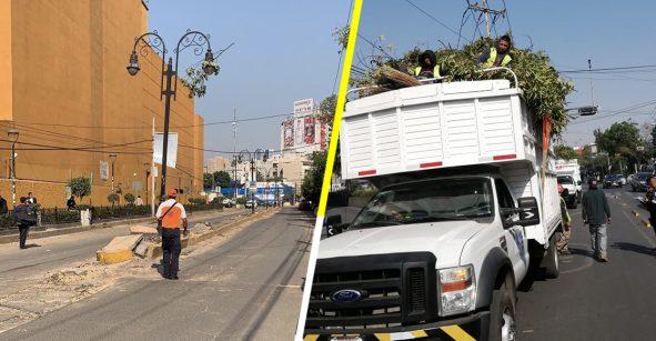 Traz: Detienen a 9 por talar 60 árboles cerca de Centro de Coyoacán
