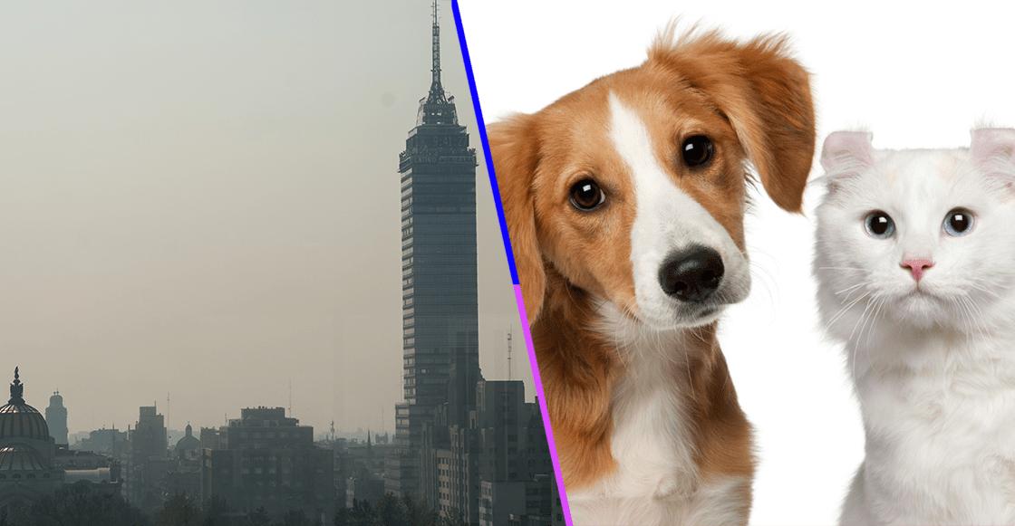 Consejos para cuidar a tus mascotas durante la Contingencia Ambiental