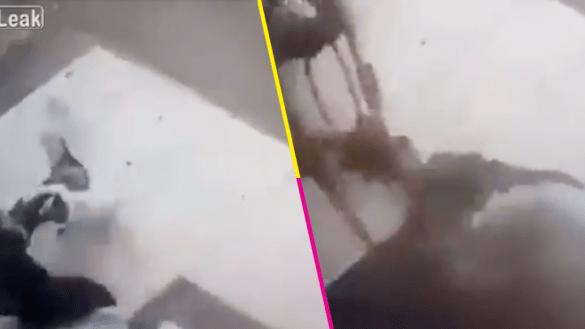 ¡Ouch! Un hombre fue atacado por un gato ninja... y no tuvo piedad