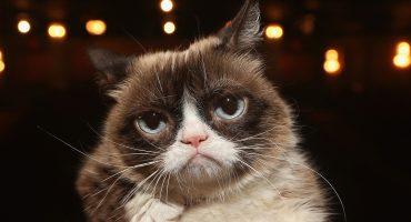 Lagrimita mil: Se nos fue Grumpy Cat, la gatita de los memes, a los 7 años