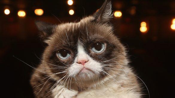 Lagrimita mil: Se nos peló Grumpy Cat, el gato de los memes, a los 7 años