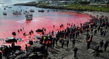 Las impactantes imágenes del mar rojizo que dejó una matanza de ballenas y delfines 