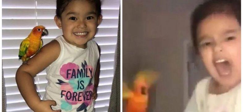 La niña que entrenó a su perico mascota para atacar
