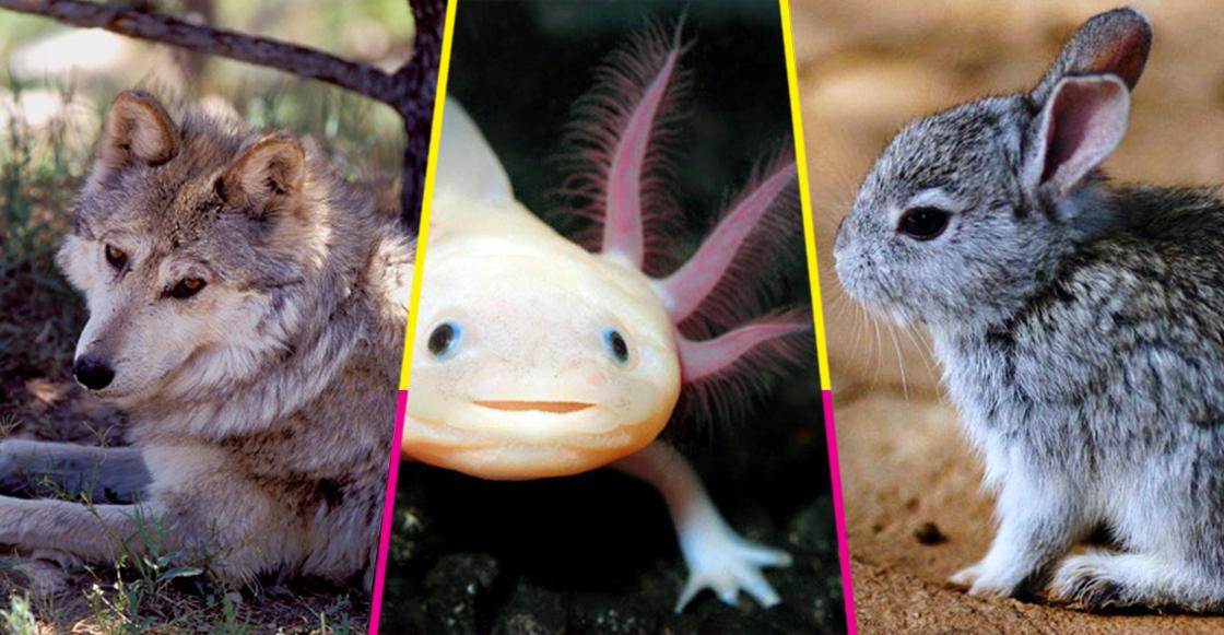 El peligro de extinción: una cruel realidad en México para muchas especies